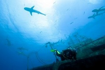 Advanced courses - Divemaster